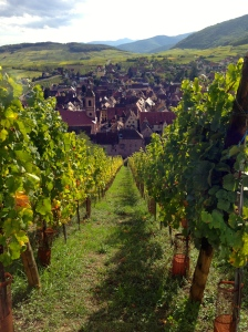 Beautiful vineyards in Riquewihr, France.